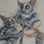 Lesser bushbabies