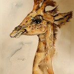 study of giraffe baby